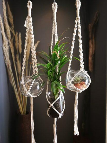 cotton plant hangers