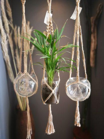 jute plant hangers
